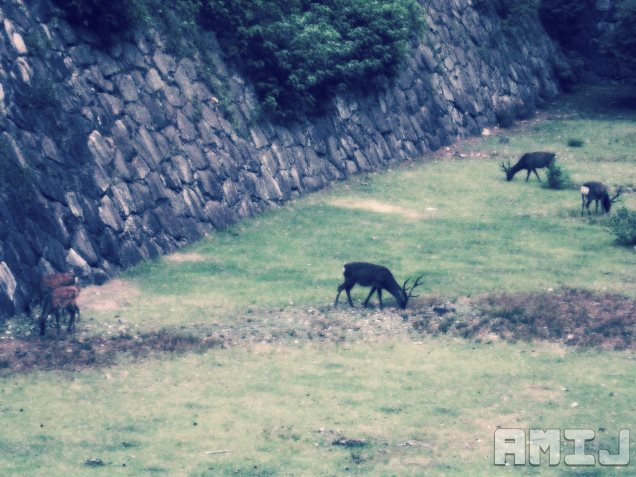 nagoya-castle-deer-grazing.jpg